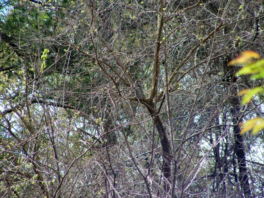The owl in the trees.  Kinda like Where's Waldo.