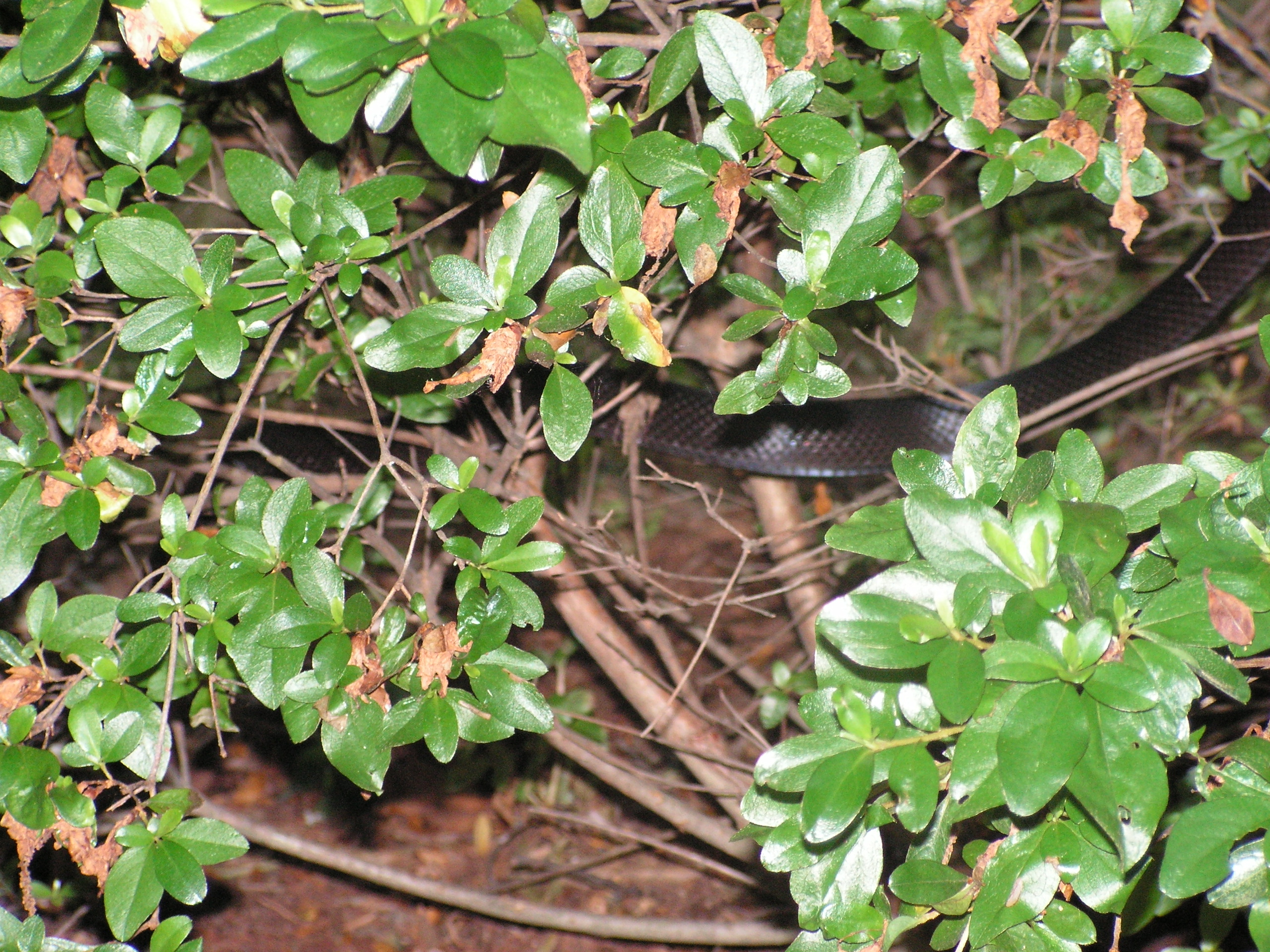 Slither in Bush
